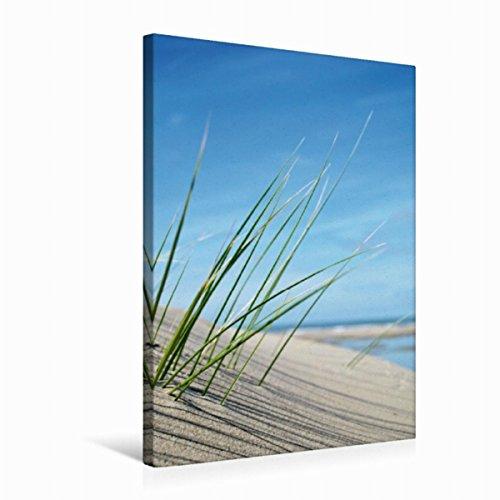 CALVENDO Premium Textil-Leinwand 50 cm x 75 cm hoch, Dekoratives Strandgras | Wandbild, Bild auf Keilrahmen, Fertigbild auf echter Leinwand, Leinwanddruck Natur Natur