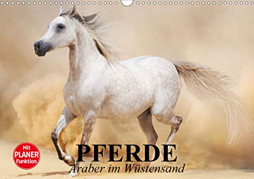 Pferde. Araber im Wüstensand (Wandkalender 2021 DIN A3 quer)