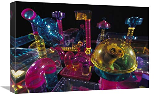 "Golden Hamster in its plastic house, overlooking hamster-city habitrail-Canvas Art-24""x16"""