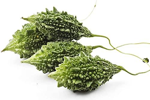 50 Stück Bitterer Kürbis Saat Non GMO Annual Heirloom Momordica Gemüse für die Gartenpflanzung Schnelles Wachstum Frische Bittermelone Beste Wahl für Gärtner
