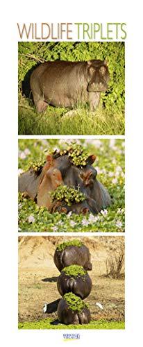 Wildlife Triplets 2021: Schmaler Wandkalender. Foto-Kunstkalender von Tieren in der Natur und im Meer. PhotoArt Vertikal. 28,5 x 69 cm.