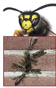 75 er Set Stoßfugenlüfter Bienenbeisser Fugenlüfter 70mm rostfrei aus Edelstahl