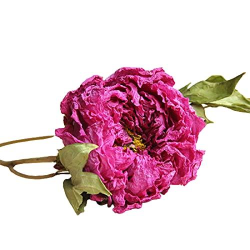 Peonía flores secas rosa roja DIY flores secas a mano velas perfumadas materiales hogar sala jardín decoración