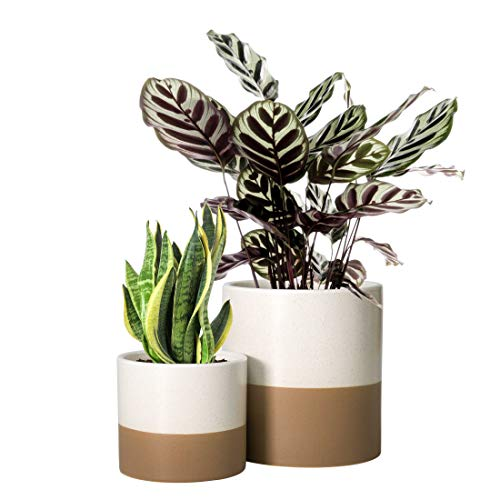 Set of 2 Plant Pots, 4 Inch & 6 Inch, Ceramic Planter Pots with Drainage Hole (Speckled White/Tan)