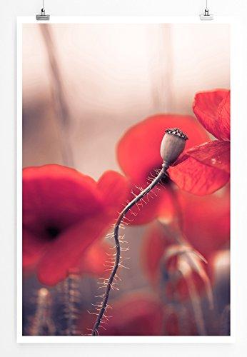 Eau Zone Home afbeelding - natuurlijke afbeeldingen - groep rode klaprozen - fotodruk in haarscherpe kwaliteit LEINWANDBILD gespannt 90x60cm