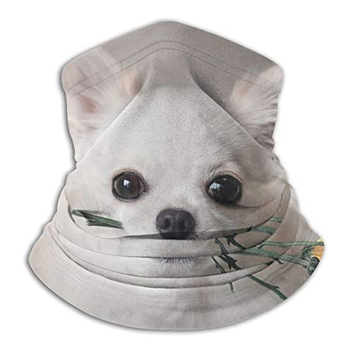 Chihuahua - Máscara de forro polar para perro, unisex, para exteriores, unisex, resistente al viento, para la cara, bandana