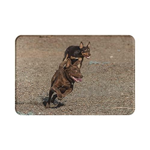 Alfombra de bienvenida Dorpa para perro Kelpie australiano, alfombrilla de bienvenida, alfombrilla para puerta, rascador, entrada, alfombra para interior y exterior, 23,6 '(ancho) x 15,8' (largo)