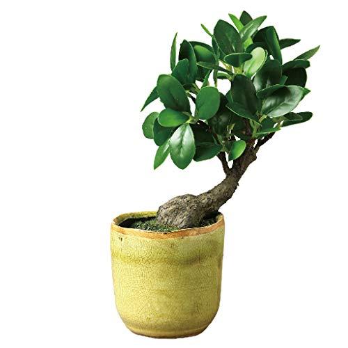 Time Concept Imitation Bonsai Banya Tree in Pot - Small, Short - Artificial Plant, Indoor & Outdoor Display, Home & Garden Decor