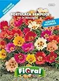 Sementi da fiore di qualità in bustina per uso amatoriale (PORTULACA SEMPLICE IN MISCUGLIO)
