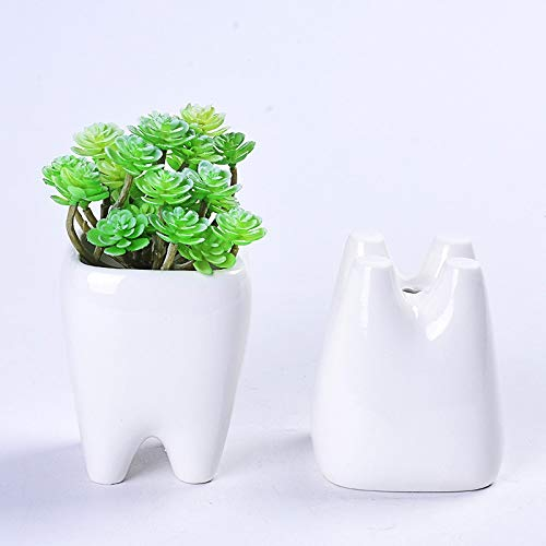 Tooth succulent planter
