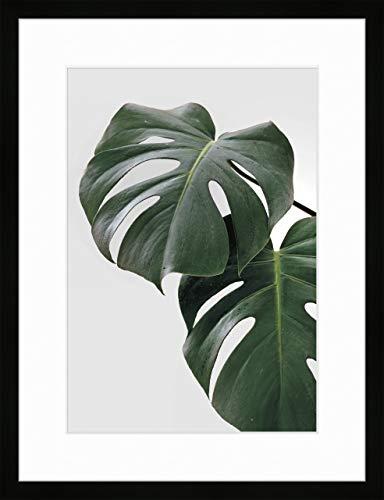Nielsen Home Bild mit Rahmen 30x40 cm (hoch) - Botanik Pflanze Grün I - Holzrahmen Schwarz m. Passepartout - Premium Poster Made in Germany