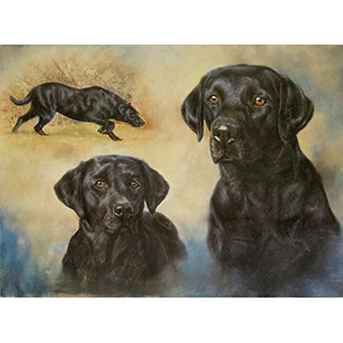 Yunzezka Pintura por Números Mascota Perro Labrador DIY Pintura por Números con Pinceles Y Pinturas Decoraciones para El Hogar Sin Marco 40x50cm