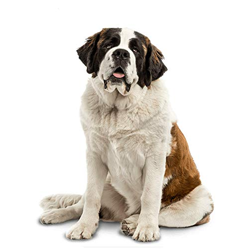 ZXiaoBai Car stickers and decals Saint Bernard Dog Car Sticker Waterproof Decal Laptop Skateboard Suitcase Motorcycle Car Accessories PVC 14cmx12cm-Style