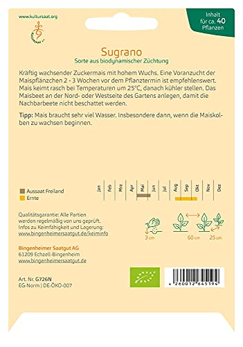 Bingenheimer Saatgut Zuckermais Sugrano demeter bio für ca. 40 Pflanzen