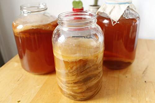 Kombuchaorganic® Großer Bio Jun Tee Scoby, fermentierte grüne Teekultur, Wohlbefinden, Starter-Set zum Selbermachen von Kombucha Getränken, Gärung