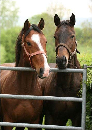 Koop een krijgen een gratis wenskaart aanbieding - Paard Paar door Gate