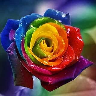Bonsai Rose - Flower Pots Planters 100pcs Rainbow Rose Beautiful Bonsai Plants for Home