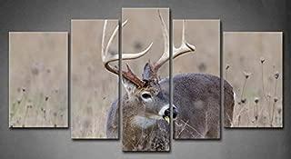 Best whitetail deer canvas art Reviews