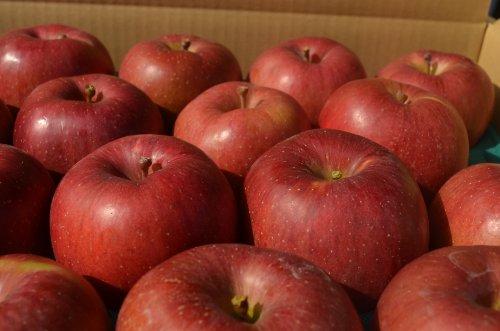 長野県産 生産農家直送りんご 「あいかの香り」上級ランク(特秀)10〜18玉 約4.7〜5kg入り/箱 収穫&発送は11月中旬頃から順次開始予定!(熟度の進行具合により収穫時期は前後します)