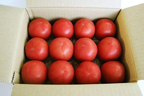 静岡県産 大玉トマト 極 桃太郎 9玉入り ~12玉入り×2箱 農家さんから産地直送でお届け お取り寄せトマトギフト