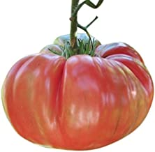 Organic Pink Brandywine Tomato Seeds - Heirloom Large Tomato - One of The Most Delicious Tomatoes for Home Growing, Non GMO - Neonicotinoid-Free.