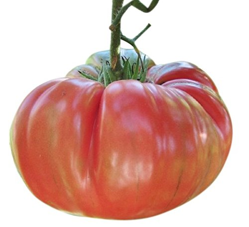 Organic Pink Brandywine Tomato Seeds - Heirloom...