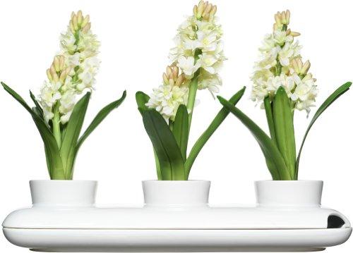 Sagaform Herbs & Spices Kräutertopf, Keramik, Weiß, 40 x 13 x 8.5 cm