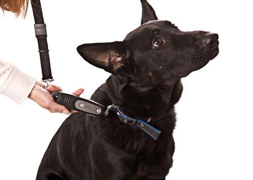Karlie Dog-E-Walk L: 170 mm B: 40 mm H: 25 mm schwarz