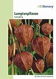 Lampionpflanze, Physalis alkekengi, ca. 60 Samen