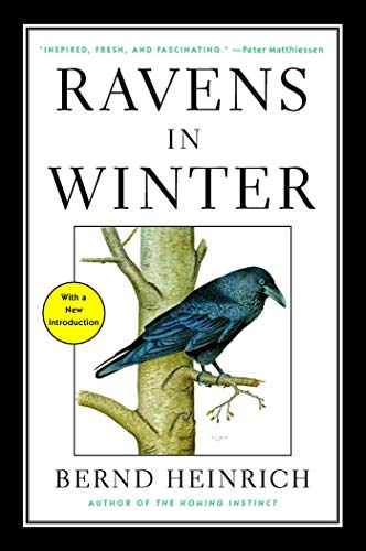 Ravens in Winter (English Edition)