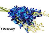 Angel Isabella, LLC 30' Tall Real Touch Dendrobium Galaxy Orchid Spray Blue Purple White - Perfect for Home Decor, Bouquets, Wreaths, etc. (Turquoise Blue & Purple (1pc))