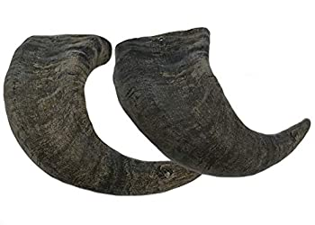 WhiteTail Naturals Water Buffalo Bully Horn  2 Pack Large  All-Natural Dog Chew and Training Treat | High Protein Low Fat Grain Free | Promotes Dental Teeth and Gum Health