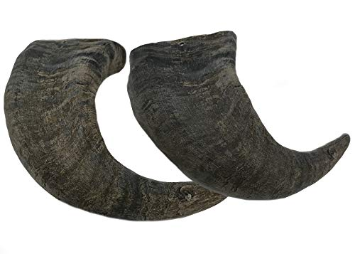 WhiteTail Naturals Water Buffalo Bully Horn (2...