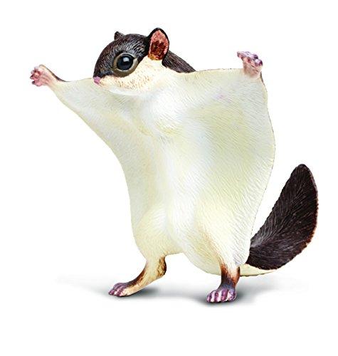 Toob Fliegendes Eichhörnchen