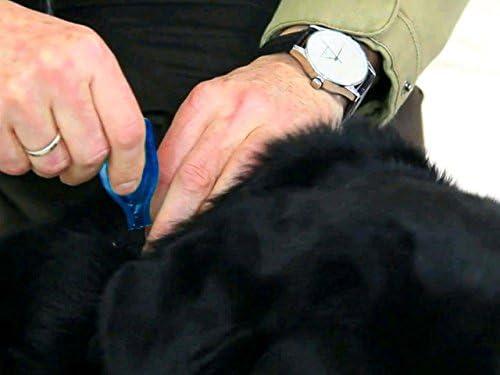 BEAPHAR – DIMÉTHICARE – Pipettes stop parasites pour petit chien