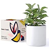 Bees & Buds 10 inch White Plant Pot - White Planters for Indoor Plants - Ceramic Planter Pots with Drainage - Mid Century Modern Large Flower Holder