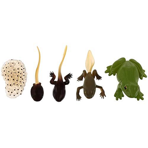 Toddmomy 5 Pièces Vie Cycle de Grenouille Oeuf Têtard à Grenouille Animaux Figurines Jouet Animal Croissance Modèle du Cycle de Vie des Jeunes Enfants Jouets d'apprentissage