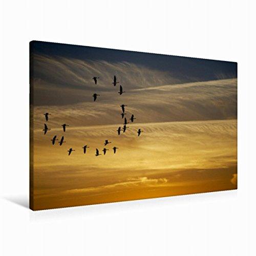 Premium - Lienzo de tela (90 cm x 60 cm, horizontal), diseño de calendario poético caminos de pared, imagen sobre lienzo auténtico, impresión sobre lienzo auténtico, diseño de CALVENDO