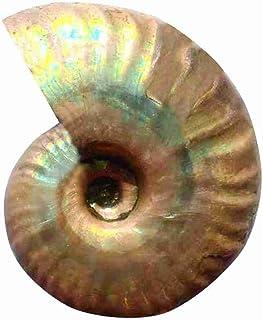 HUANGA 1 Pc Naturel conque fossile coloré conque Coquille Fluorescent Escargot Grand Coquillage Aquarium décor Miniature F...