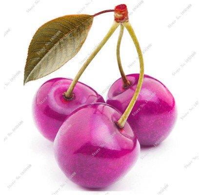 Graines Multi Color Cerise Fruit de Fleurs vivaces Jardin Plantes en pot Heirloom fruit délicieux croissance naturelle 10 particules 5
