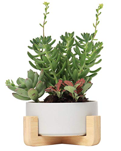 SAROSORA Ceramic Succulent Planter with Bamboo Tray 6'' Bonsai Pot Mid Century Modern Decoration for Living Room Tabletop (6'', Grey)