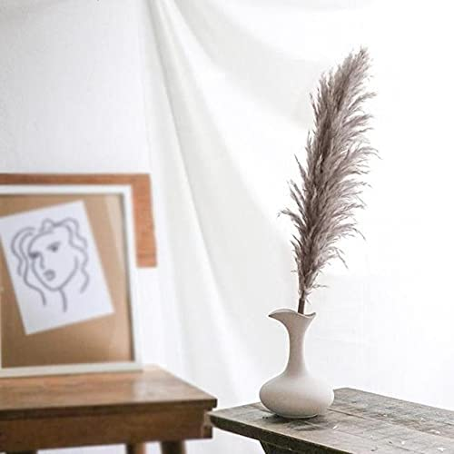 Thecookie Real Pampas Grass Natural Plants Wed Dried Home Flower Finally popular brand Direct stock discount