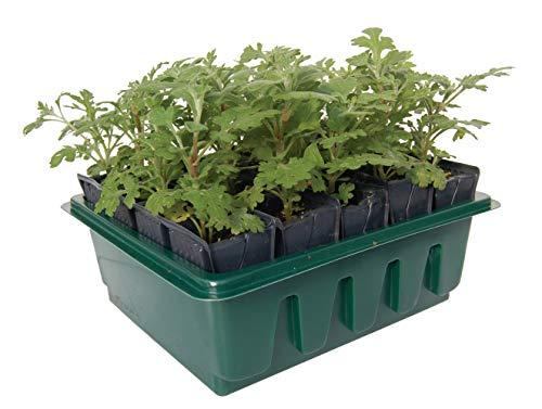 Haxnicks Tierra Garden Kit pour semis avec système pour Racines Profondes Rootrainers compacts Rapides 20 Cells Multi-Color