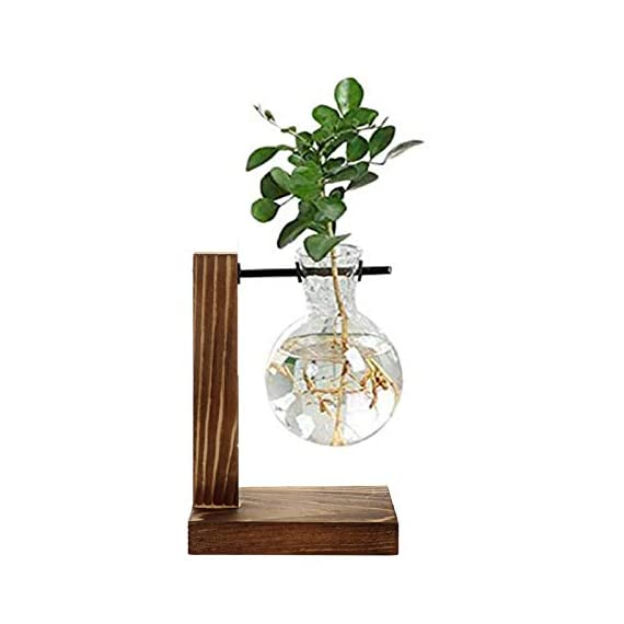 Water Planting Glass Vase,Clear Glass Vase Hanging Plant Terrarium with Retro Solid Wooden Stand for Hydroponics Plants… 1 ♚MATERIAL-Wooden+Glass.Great for floral arrangement, home decoration as well as various gift ideas ♚ DESIGN - Vintage design,DIY Planter with mini bulb shape vase in wooden stand. Smooth surface, good permeability, beautiful style ♚DECORATION- Fill with small plants,goldfish,or other decorative objects like beach sand and shells you collected and use as an eye-catching decorative accent for any space. Ideal for home, office, garden, wedding or holidays as a decoration.