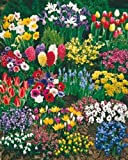 185 Blumenzwiebeln 'Zauberhafter Lenz', Komplett-Set