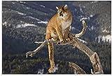 APAZSH Posters para Pared Póster de Animal Puma en una Rama, póster de Arte en Lienzo y Poster de Decoracion de impresión de Cuadros artística de Pared 60x90cm x1 Sin Marco