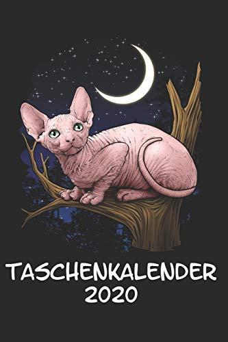 Taschenkalender 2020: Taschenkalender für Sept. 2019 bis Dezember 2020 A5 Terminplaner Wochenplaner Terminkalender Wochenkalender Organizer mit Sphynx-Katze Nacktkatze