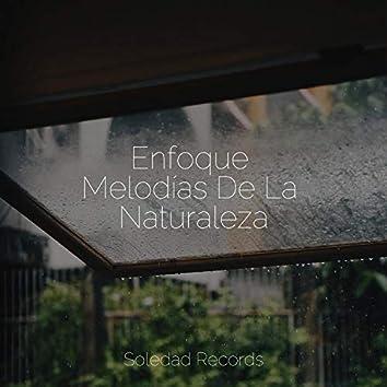 Enfoque Melodías De La Naturaleza