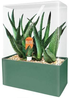 Unique Gardener Grow Your Own Aloe Plant – Fun and Easy to Grow Altruistic Aloe Terrarium Kit Includes Everything Needed to Grow Aloe Plants – Just Add Water