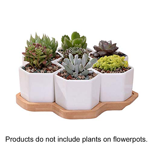 Brattie Artificial Bonsai Cedar, Hexagonal Ceramic Succulent Plant Flower Pot Garden Planter Bamboo Tray Holder